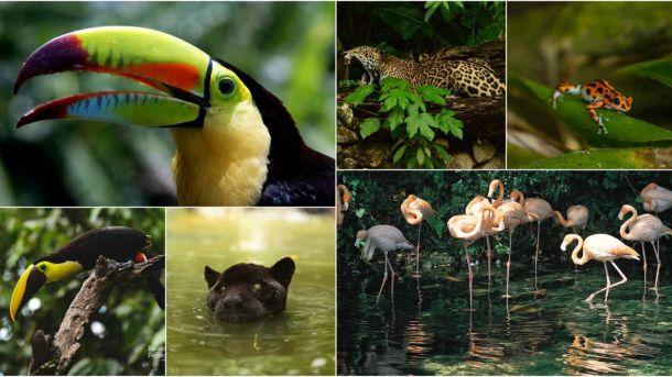 Centroamérica: Cuna de las especies más exuberante del planeta