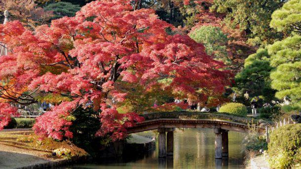 Destinos tokiotas de otoño