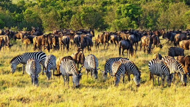 África Oriental, en busca de la gran migración