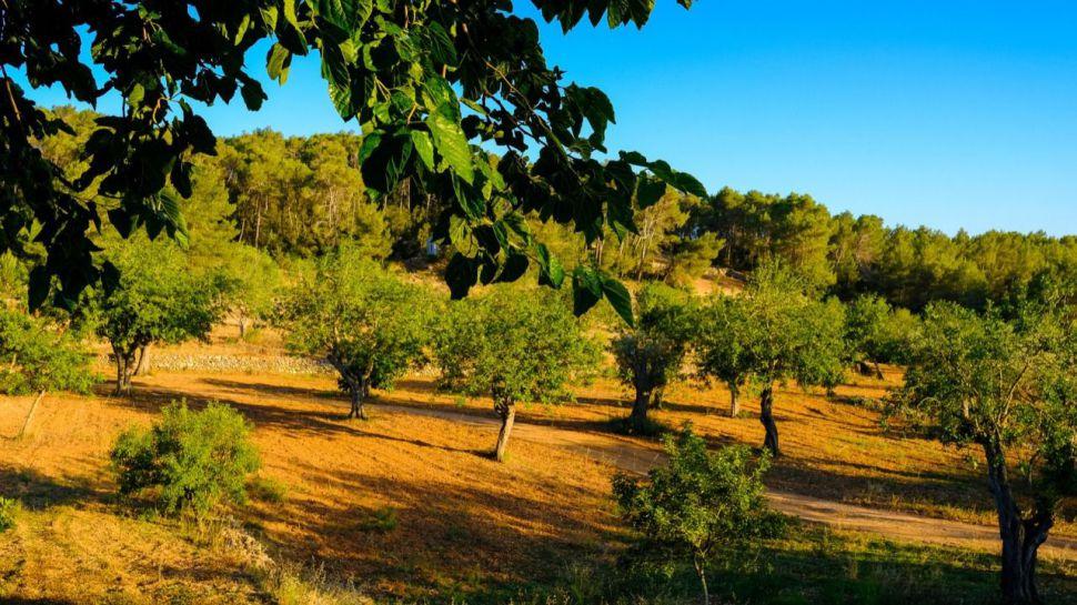 Planes para disfrutar de la Ibiza más desconocida con niños