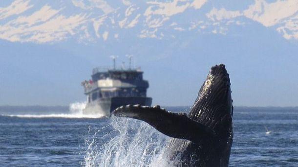 Viajar a Costa Rica sin PCR ni cuarentena en plena época de avistamiento de ballenas