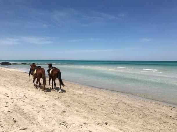 Djerba, un enclave idílico entre el Mediterráneo y el Sahara